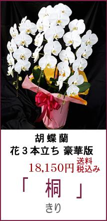 お祝い用 胡蝶蘭良品 花5本立ち